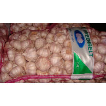 Export New Crop Pure White Chinese White Garlic